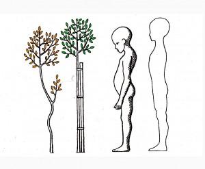 1b) růst človeka