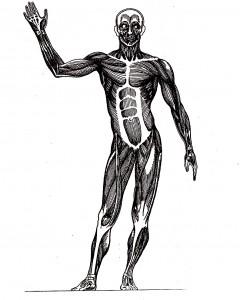3) svalový aparát