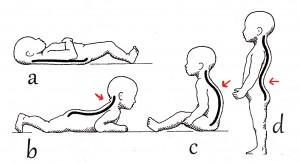 4b) vývoj zakřivení páteře
